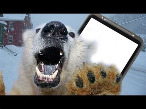 Polar bear attack: man escapes using mobile-phone in
